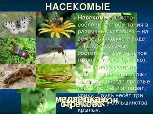 бабочка Аполлон оса жук-олень комар кузнечик медведка стрекоза НАСЕКОМЫЕ Насе
