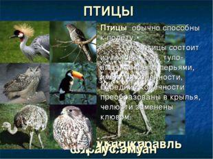 венценосный журавль ПТИЦЫ сова кукушка тукан сокол-сапсан страус эму Птицы об
