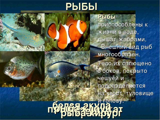 белая акула пятнистый скат пиранья рыба-клоун рыба-хирург РЫБЫ Рыбы приспосо...
