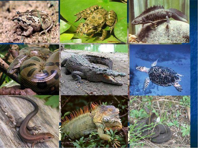 гребенчатый тритон лягушка крокодил гадюка игуана морская черепаха камышовая...