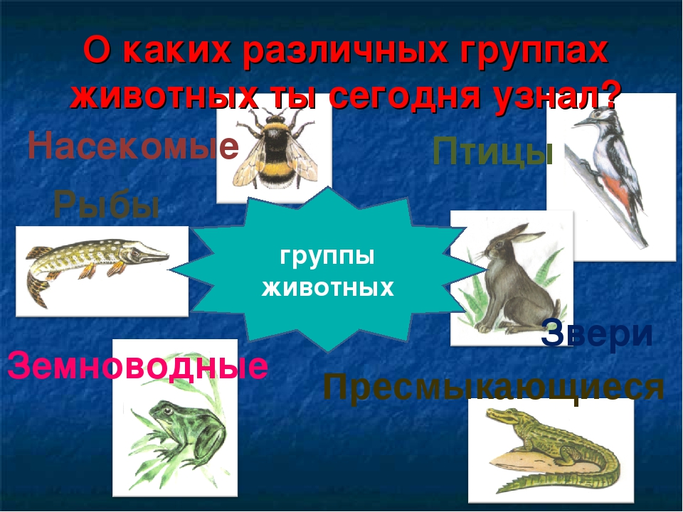 О каких различных группах животных ты сегодня узнал? Насекомые Птицы Звери Ры...
