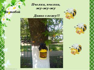 Пчелка,пчелка, жу-жу-жу За тобой Давно слежу!!!