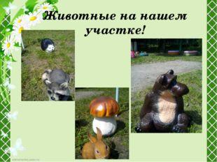 Животные на нашем участке!