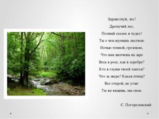 Здравствуй, лес! Дремучий лес, Полный сказок и чудес! Ты о чем шумишь листвою