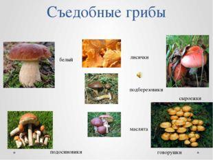 Съедобные грибы лисички подберезовики маслята белый подосиновики сыроежки гов