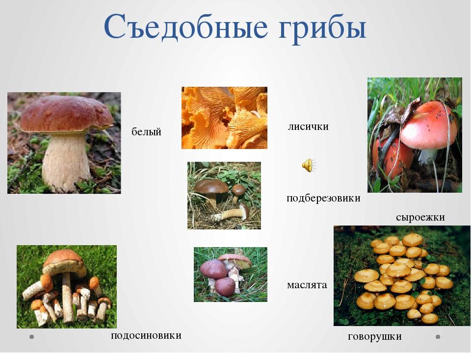 Съедобные грибы лисички подберезовики маслята белый подосиновики сыроежки гов...