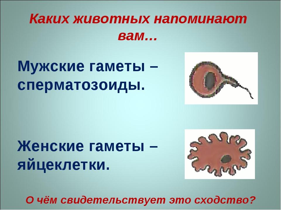 srok-vosstanovleniya-spermatozoidov
