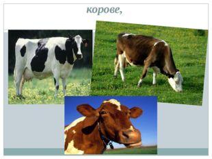 корове,