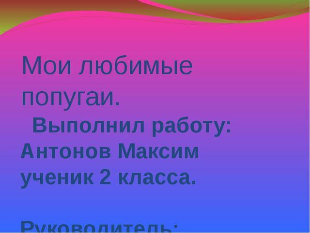 Мои любимые попугаи. Выполнил работу: Антонов Максим ученик 2 класса. Руковод...
