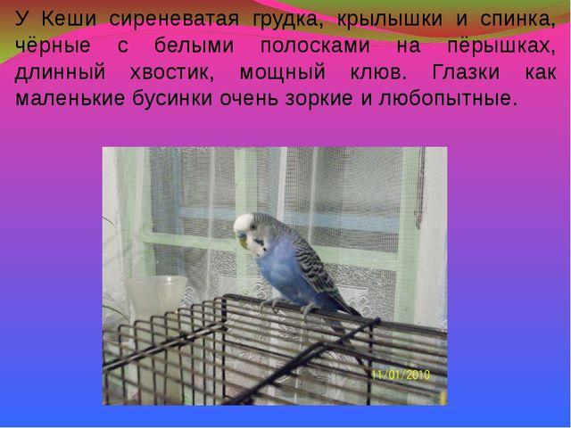 У Кеши сиреневатая грудка, крылышки и спинка, чёрные с белыми полосками на пё...