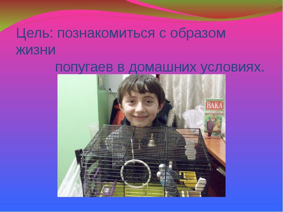 Цель: познакомиться с образом жизни попугаев в домашних условиях.