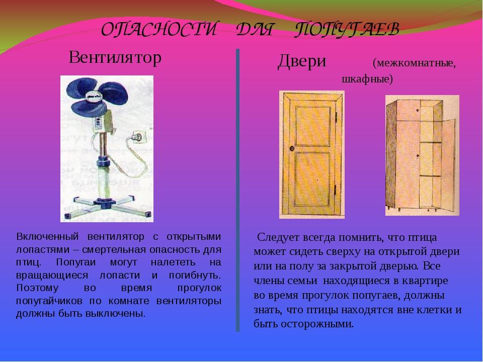 ОПАСНОСТИ ДЛЯ ПОПУГАЕВ Включенный вентилятор с открытыми лопастями – смертель...