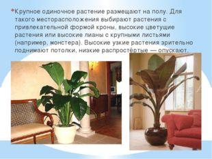 Крупное одиночное растение размещают на полу. Для такого месторасположения вы
