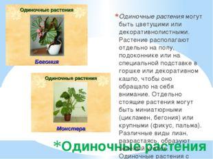Одиночные растения Одиночные растения могут быть цветущими или декоративнолис