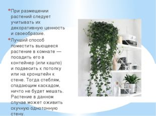 При размещении растений следует учитывать их декоративную ценность и своеобра