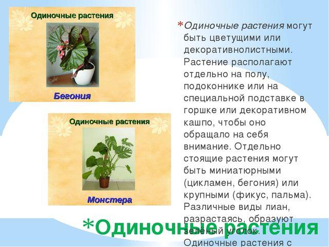 Одиночные растения Одиночные растения могут быть цветущими или декоративнолис...