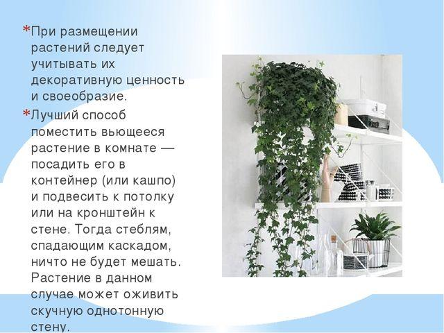 При размещении растений следует учитывать их декоративную ценность и своеобра...