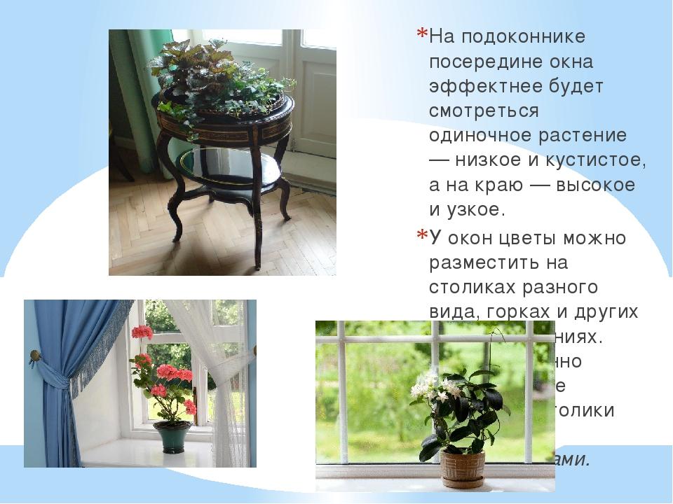 На подоконнике посередине окна эффектнее будет смотреться одиночное растение...
