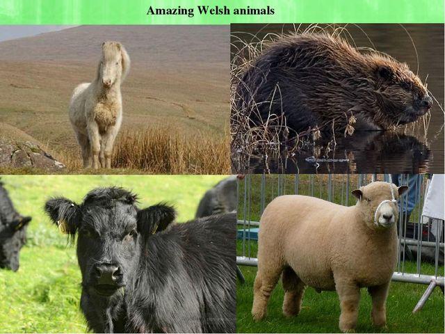 Amazing Welsh animals