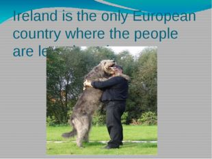 Ireland is the only European country where the people are less than dogs.