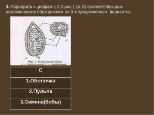 3. Подобрать к цифрам 1,2,3 рис.1.(а ,б) соответствующие анатомические обозна