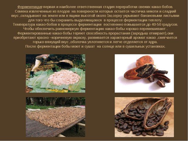 Ферментация-первая и наиболее ответственная стадия переработки свежих какао-б...