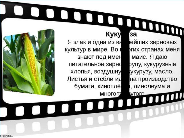 Кукуруза Я злак и одна из важнейших зерновых культур в мире. Во многих стран...