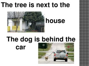 The tree is next to the house The dog is behind the car
