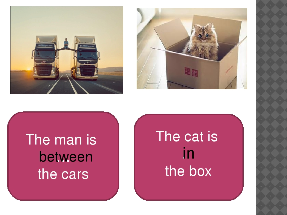 The man is … the cars The cat is … the box between in