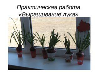 Практическая работа «Выращивание лука»