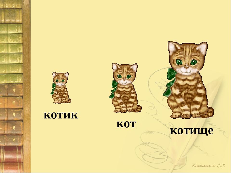 котик кот котище