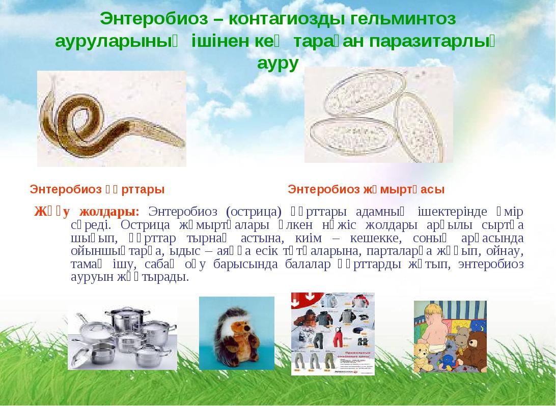 Энтеробиоз – контагиозды гельминтоз ауруларының ішінен кең тараған паразитарл...
