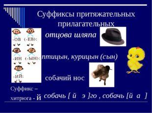 Суффиксы притяжательных прилагательных отцова шляпа птицын, курицын (сын) соб