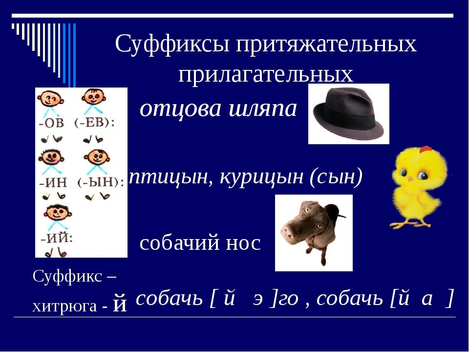 Суффиксы притяжательных прилагательных отцова шляпа птицын, курицын (сын) соб...
