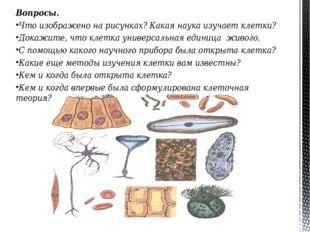 Вопросы. Что изображено на рисунках? Какая наука изучает клетки? Докажите, чт