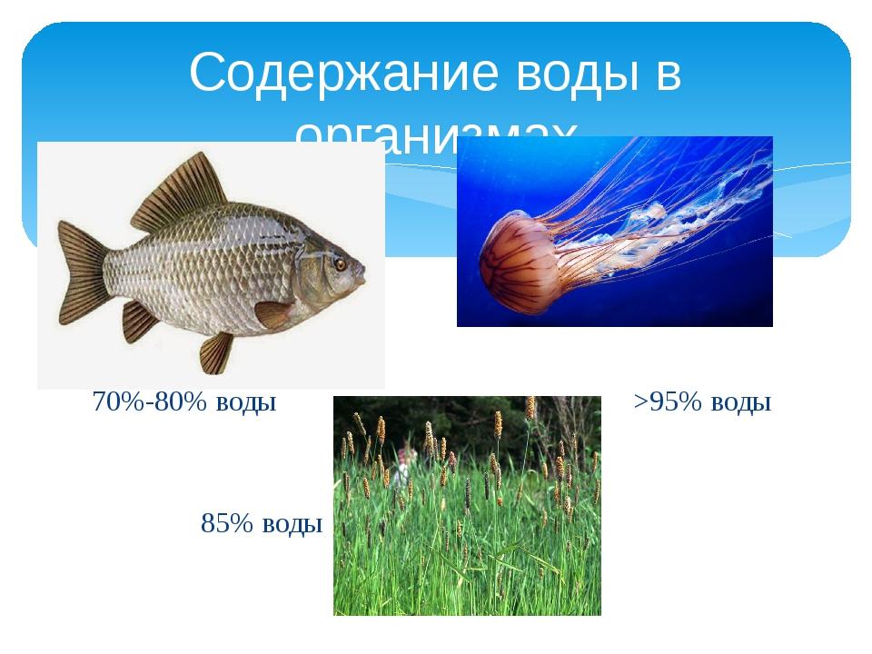 70%-80% воды >95% воды 85% воды Содержание воды в организмах
