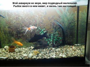 Мойаквариумне море, мир подводный маленький. Рыбок много в нем живет, и жиз