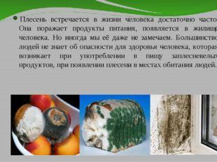 Плесень встречается в жизни человека достаточно часто. Она поражает продукты