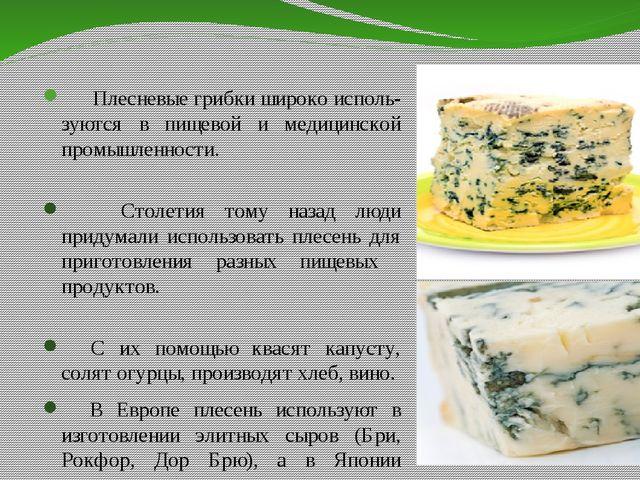 Плесневые грибки широко исполь- зуются в пищевой и медицинской промышленност...