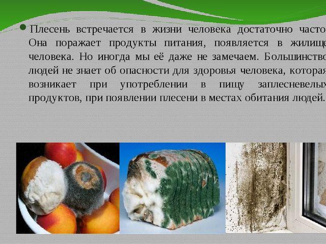 Плесень встречается в жизни человека достаточно часто. Она поражает продукты...
