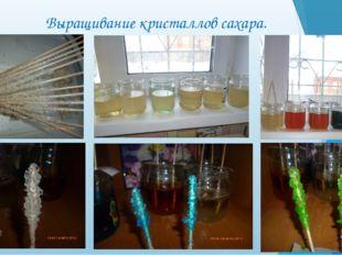 Выращивание кристаллов сахара.