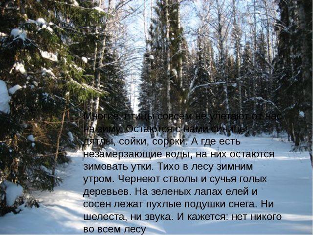 Многие птицы совсем не улетают от нас на зиму. Остаются с нами синицы, дятлы,...