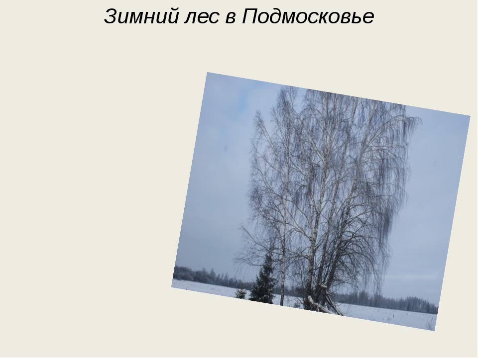 Мороз в окно глядит и дышит И на стекле узоры пишет, А против мерзлого окна,...
