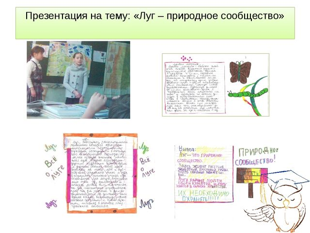 Презентация на тему: «Луг – природное сообщество»