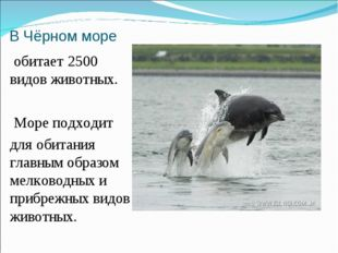 В Чёрном море обитает 2500 видов животных. Море подходит для обитания главным