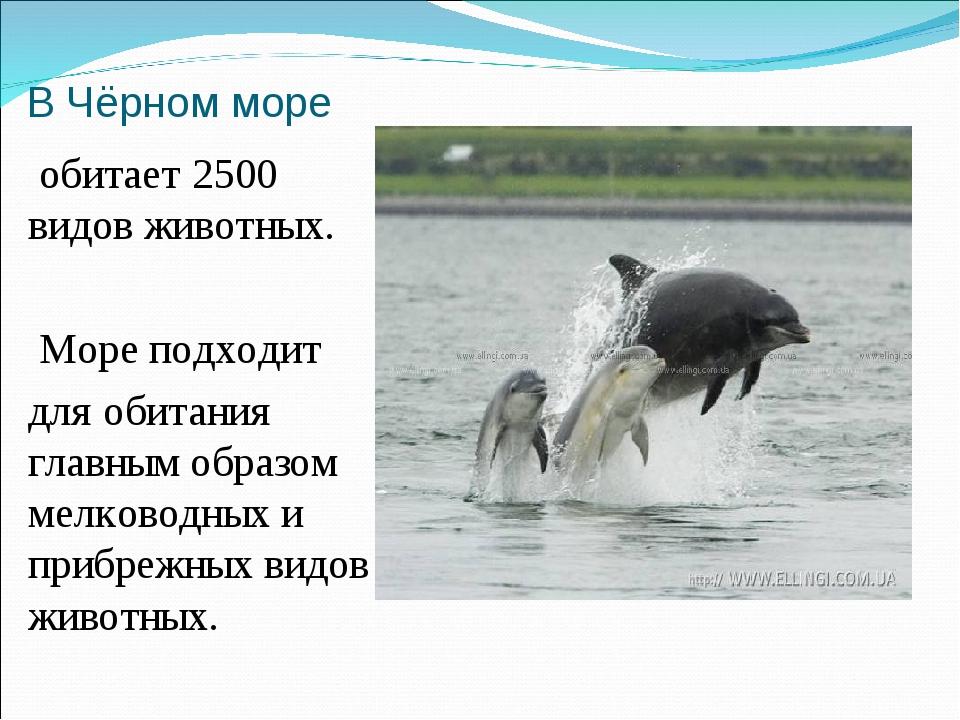 В Чёрном море обитает 2500 видов животных. Море подходит для обитания главным...