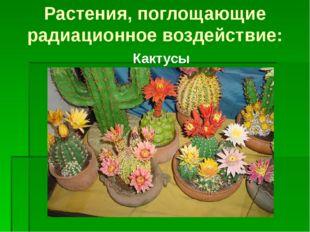 Кактусы Растения, поглощающие радиационное воздействие: