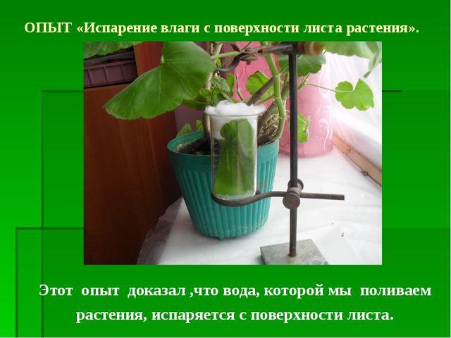 Этот опыт доказал ,что вода, которой мы поливаем растения, испаряется с повер...