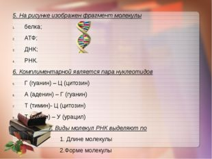 5. На рисунке изображен фрагмент молекулы белка; АТФ; ДНК; РНК. 6. Комплимент