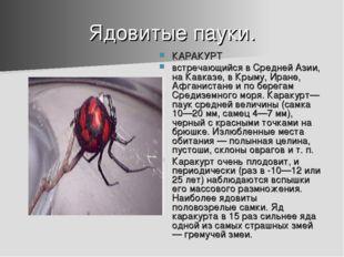 Ядовитые пауки. КАРАКУРТ встречающийся в Средней Азии, на Кавказе, в Крыму, И